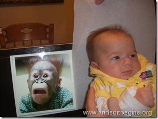 BC chimpanzee hair